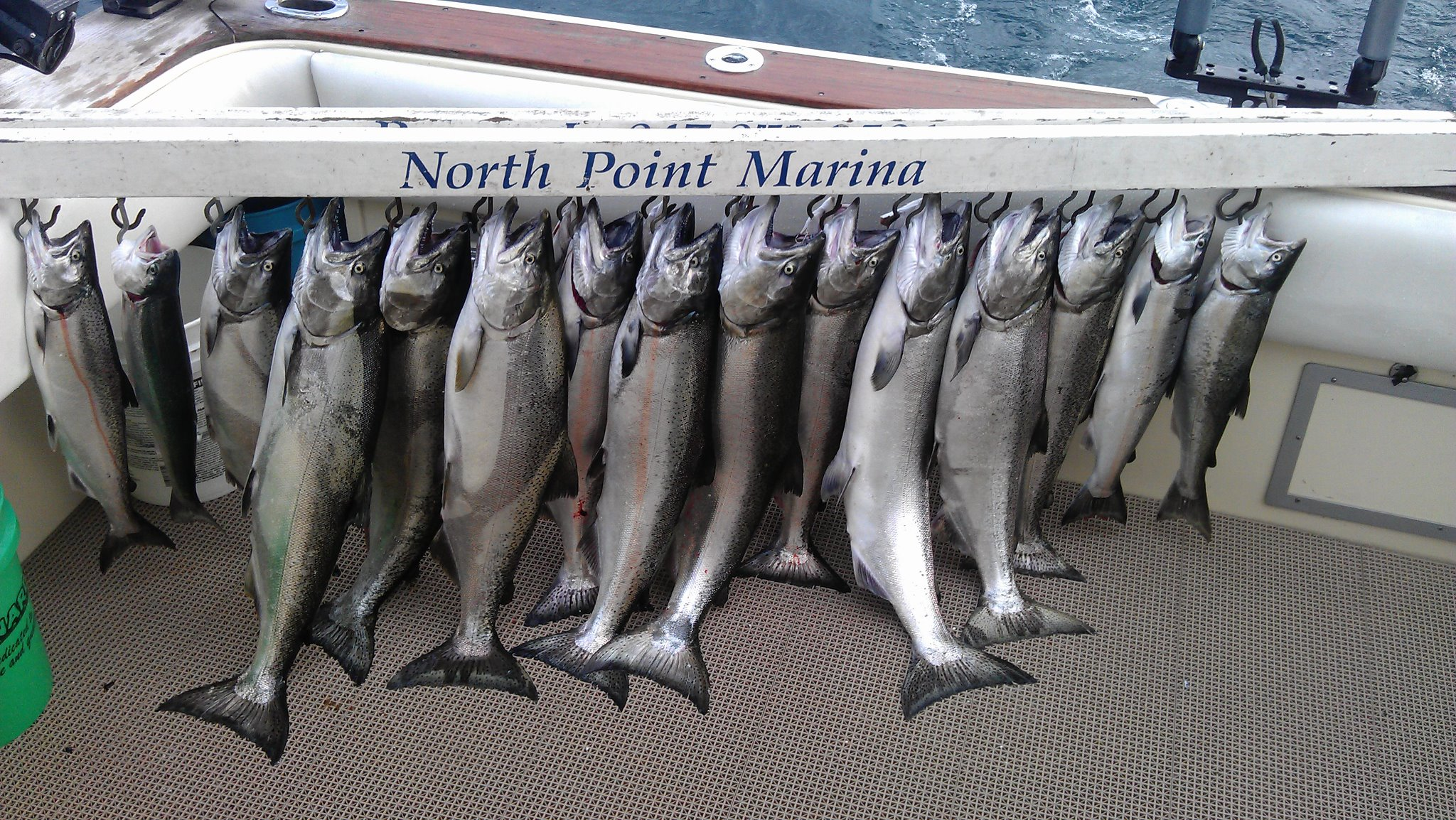 chicagoland area fishing at its best for salmon