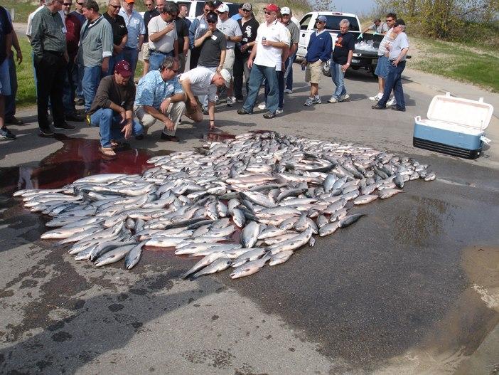 company salmon charter outing