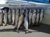 chinook salmon fishing charter illinois