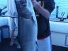 salmon charter fishing illinois