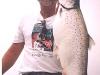 lake michigan brown trout